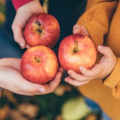 kids in an orchard holding red apples