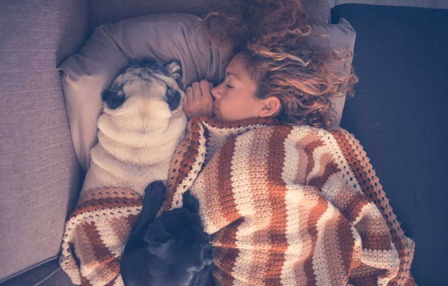 true love sleeping all together in the morning young beautiful woman and two pretty dog pug