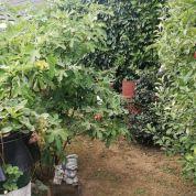 Záhrada 2137m2