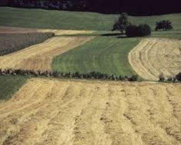 Kúpim ornú pôdu v Trnavskom kraji