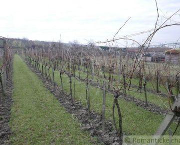Záhrada s udržiavaným viničom vo Vinosadoch pri Pezinku na predaj