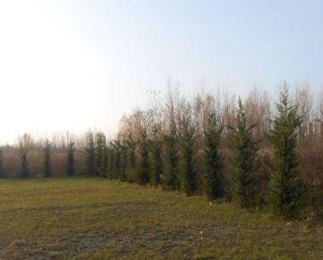Predaj stavebného pozemku 2.000 m2 na šport a voľný čas pri Dolnozemskej ceste v Petržalke  /možnosť prikúpenia ďalších pozemkov/