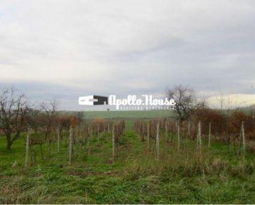 Šenkvice: záhrada s viničom v intraviláne, 2006 m2