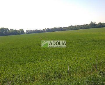 Predaj 130 ha pôdy v celosti JZ od mesta Košice, s každoročným výnosom z prenájmu.