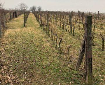 Pribeta vinice, chmelnice na predaj - osobné vlastníctvo