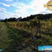 Chmelnica, vinica 2400m2
