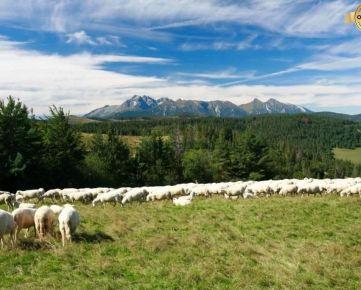 Predaj pozemkov na hrebeni Spišskej Magury