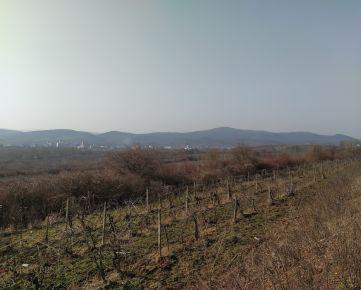 Predaj vinica 4584m2, Dolná ul., Modra.