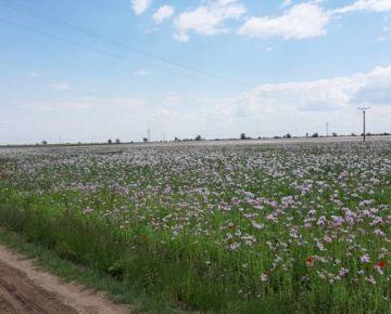 Orná pôda v obci Tomášov od 6. 000m2 do 39. 000m2, okres Senec.