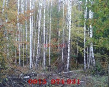 Lesný pozemok na predaj