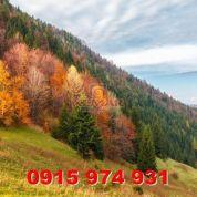Lesná pôda 8881m2