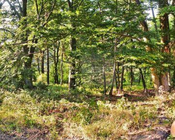 Zaježová – teraz 1,4ha za 1,99 eur/m2 – magický lesík