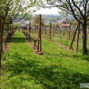 Chmelnica, vinica 751m2
