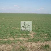 Orná pôda 50000m2