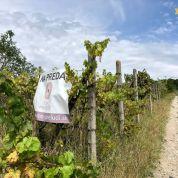 Chmelnica, vinica 1015m2