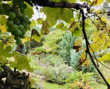Záhradná chatka s pozemkom 400m2 - Malacky