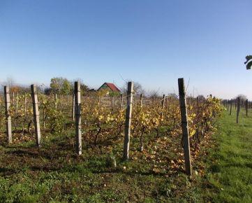 Exkluzívne na predaj udržiavaný vinohrad, na pozemku1553 m2