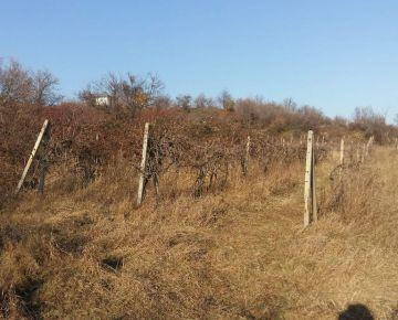 Predáme pozemok vo Svätom Jure na LV vedný ako vinica. 1059m2