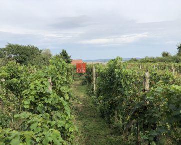 Vinič s murovanou chatkou Nová Ves nad Žitavou na predaj