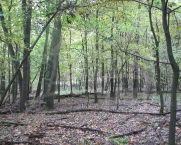 Lesný rovinatý pozemok neďaleko golfového pri obci Lozorno