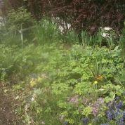 Záhrada 256m2