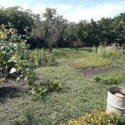Záhrada 250m2