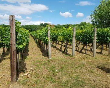 Gbelce vinohrad 2472/21