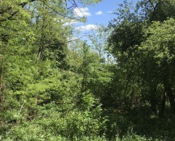 Rekreačný pozemok na okraji lesa, Strmý bok