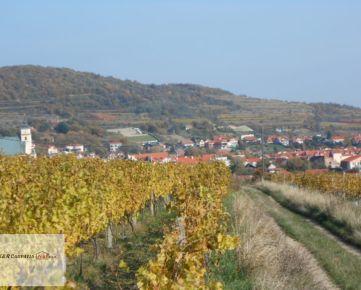 K&R CARPATIA-real ** Vinica v krásnom prostredí Malých Karpát - Svätý Jur - lokalita Kopoldy
