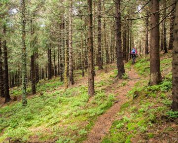 PREDAJ - Lesné pozemky v k.ú. Debraď