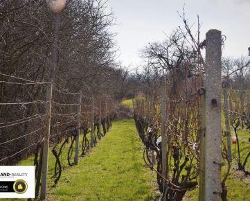 Na predaj vinohradnícky dom s pivnicou, vinicou a sadom v Skalici