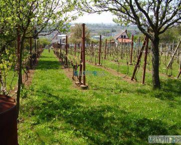 MAXFIN REAL – vinica - k. ú. Levice