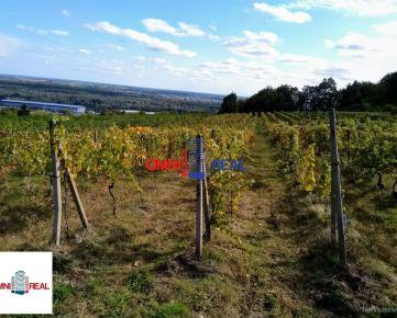 Obrábaný vinohrad - Svätý Jur - 13,5 ára, lokalita Žebráky (Peky)